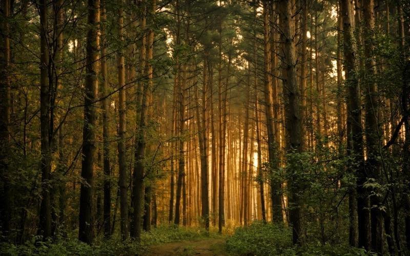 Фото бесплатно в лесу