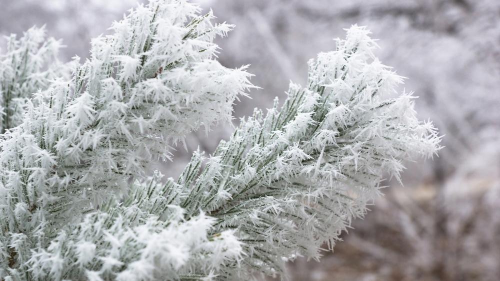 МЧС: с5 по7января вПрикамье может наблюдаться сильная изморозь
