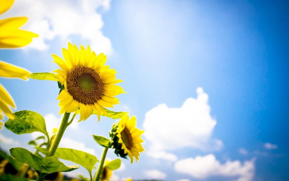 Следующая неделя вПрикамье будет самой теплой завсе лето