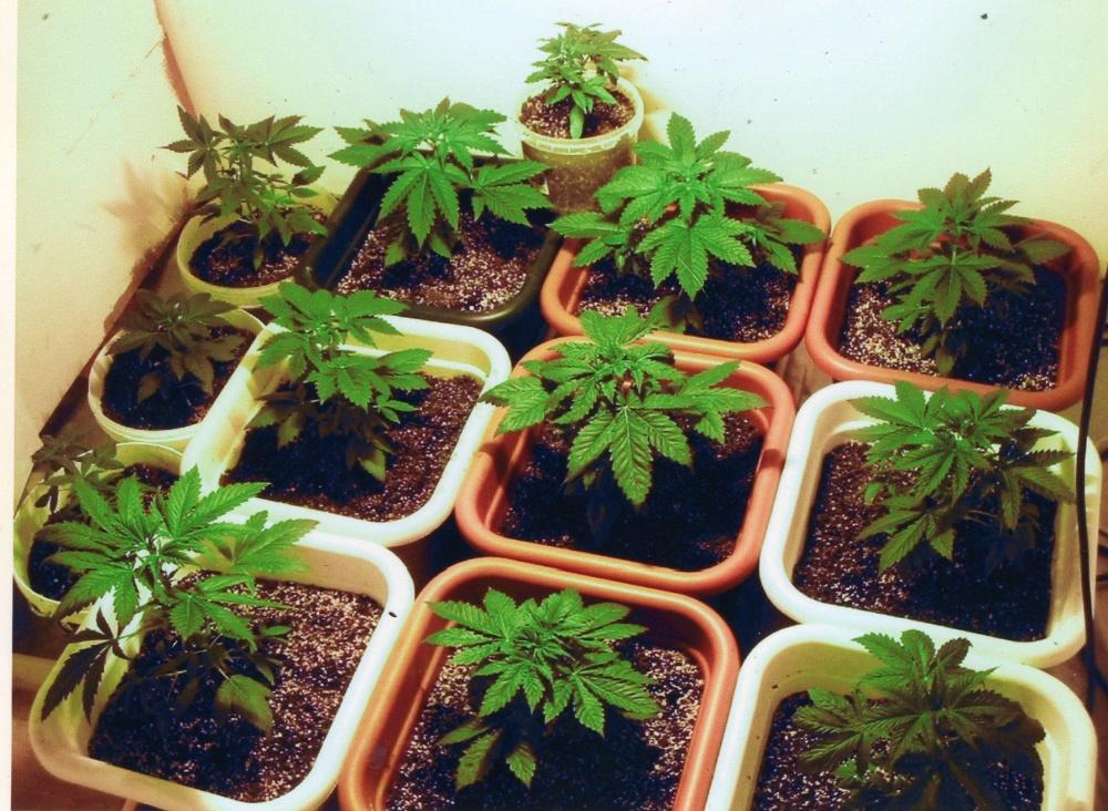 Инструкция по выращиванью конопли фильм про марихуану на острове